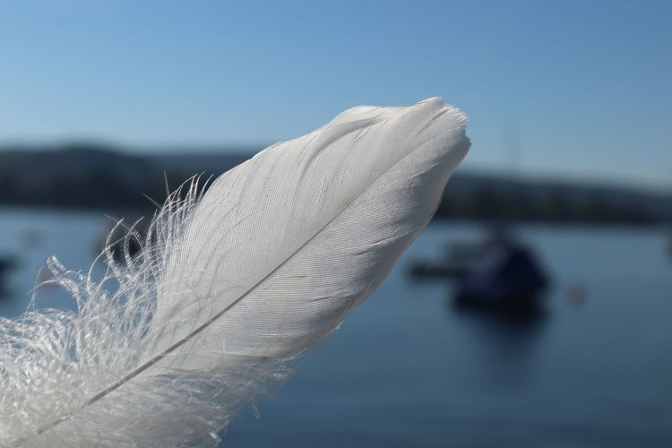 Close-up of feather against blue sky