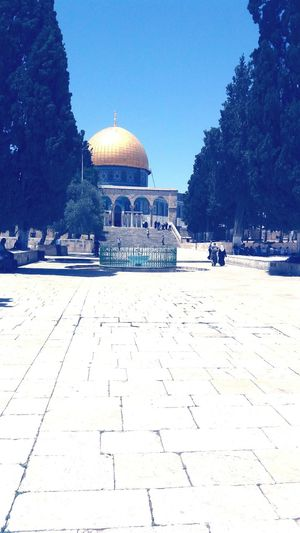 Mousqe Muslim Built Structure Alaqsamosque First Eyeem Photo EyeEmNewHere EyeEm Diversity Green Color No People Outdoors Growth Dome Of The Rock EyeEmNewHere
