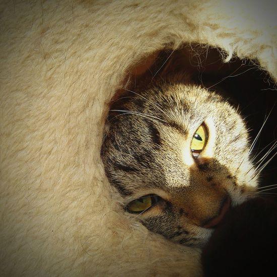 Close-up of cat hiding in fur pet bed