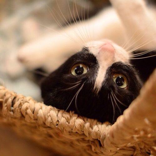 Ilovemycat Cat Cat♡ Catsofinstagram
