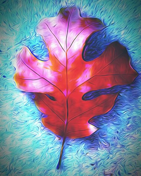 Feather  Directly Above Close-up No People Science Outdoors Day Oak Leaf Leaf Stuffedanimal Cartoon Effect  Cartoonish