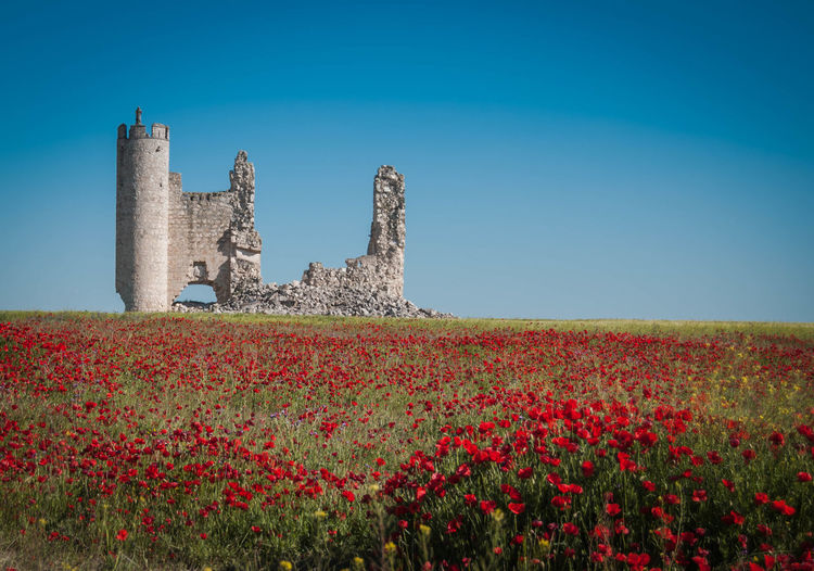 Old castle on field against clear blue sky