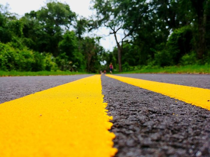 Surface level of yellow marking on road amidst trees