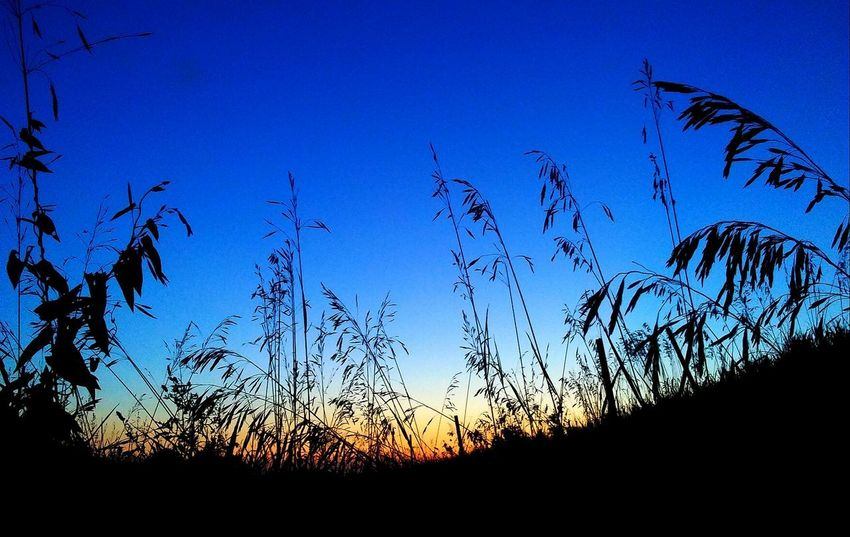 Beauty In Nature Outdoors Nature Sky No People Silhouette Night Low Angle View Tranquility Orange Color Picturejunkie Check This Out The Week On EyeEm Iowa Pretty♡ Blue Plant Sunset Nature