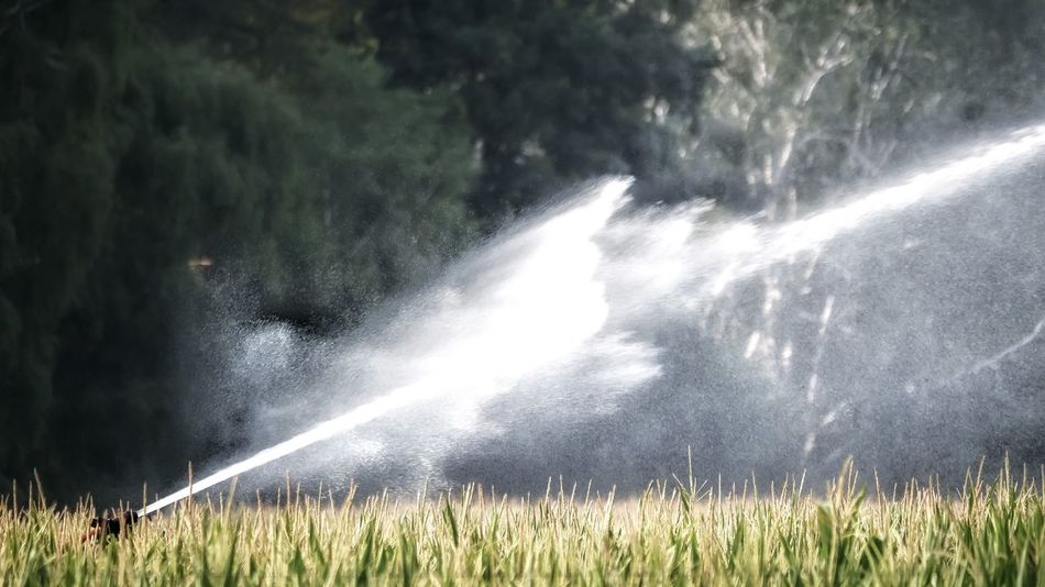 EyeEm Best Shots Sprinkler System Water Spraying Cereal Plant Rural Scene Motion Agriculture Field Summer Cultivated Land Plantation Watering Flowing Water Farmland Agricultural Field