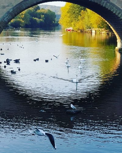 Riversevern River Riverside Seagulls Gulls Bridge Riverporn Water Reflections Phoneography Swans