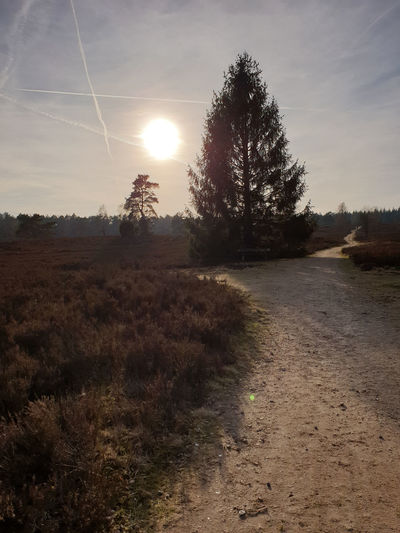 Tree Tranquility Tranquil Scene Sunlight Sun Landscape Scenics - Nature Field Vapor Trail Sunbeam Sunset Environment Heide Nordheide Hamburg Heather Heath Moor  Landscape_Collection Landscape_photography Path Coniferous Tree Wintersun Countryside Lens Flare