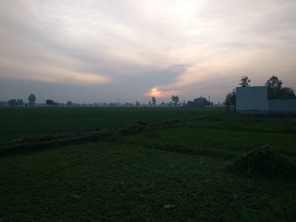Field Agriculture Social Issues Landscape Crop  Farm Sunset Rural Scene Tranquil Scene Outdoors Freshness Nature Environment Scenics Beauty In Nature No People Tranquility Cloud - Sky Water Tree