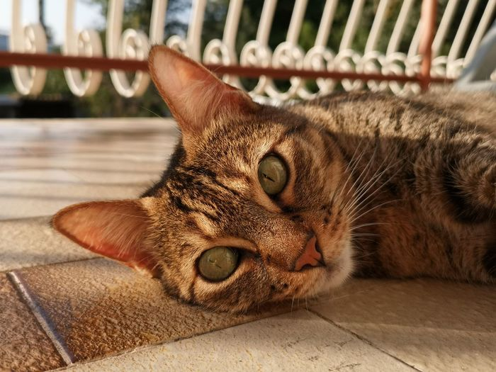 Close-up of cat resting on floor