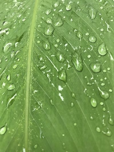 Backgrounds Beauty In Nature Close-up Day Drop Fragility Freshness Full Frame Green Color Growth Leaf Nature No People Outdoors Plant RainDrop Textured  Water Wet