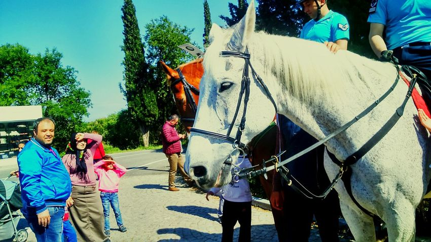 ı Love Horses