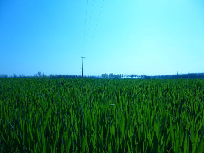 Agriculture Beauty In Nature Crop  Day Electricity  Environment Farm Field Fuel And Power Generation Green Color Growth Land Landscape Nature No People Outdoors Plant Power Supply Rural Scene Scenics - Nature Sky Tranquil Scene Tranquility