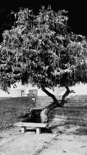 Arvores... 🌿❤ Tree #trees #way #brazil #brasil #green #summer #sun #sunnyday #beautiful #arvores #caminho Paisagem Praça  Praça🌱🌱