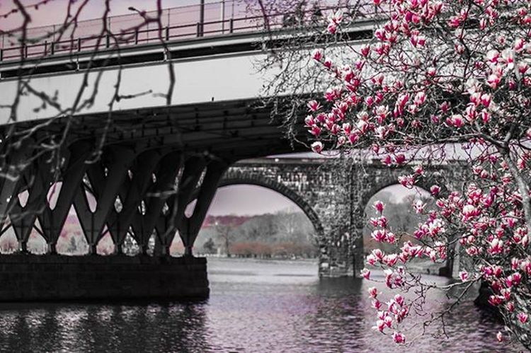 Blossoms. Bw_crew Instasunny Bw Love Mirrorreflection Beauty ArchiTexture Religion Stencil StudioLife Instaart Amen Compassion Sunlight Colores Mothernature Sunrise Minimalista Gallery Meditation Hdrama Filter Photo Igers Colorworld picoftheday colors sky orange urbanwalls