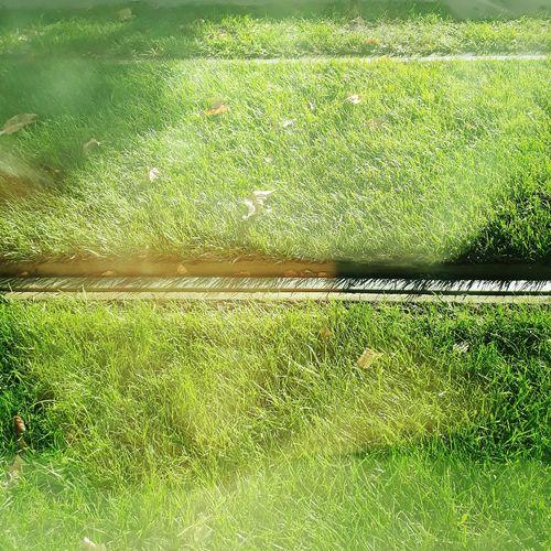 Grass on field