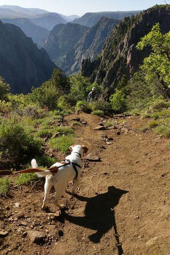 Canyon Trail Mixed-breed Dog Jackrussellterrier Beagle Hiking Pets Dog Tree Shadow Landscape Natural Landmark Scenics Pine Tree Tranquil Scene Idyllic