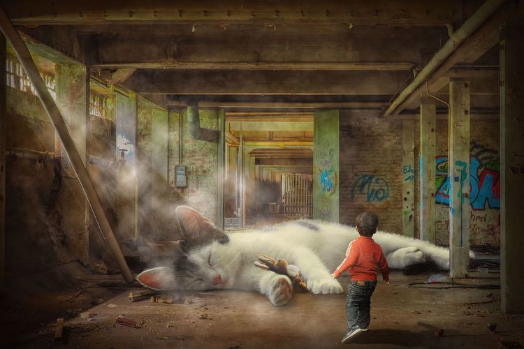 Boy spots a giant cat at an abandoned factory building Lost Place Abandoned Factory Architecture Boy Bunny  Cat Child Childlike Curiosity Domestic Animals Dust Mammal Mysterious One Person Pets Plush Toy Rear View Sleeping Cat Sun Rays