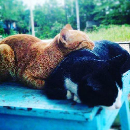 Cat love Pets Animal Themes Nature Animal First Eyeem Photo