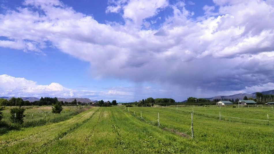 Rainclouds Rainy Days☔ Taking Photos Sky Sky And Clouds Clouds And Sky Omak WA Omak,WA Washington State Irrigation Pasture Land Unenhanced Rural Cloudy My Point Of View My Year My View
