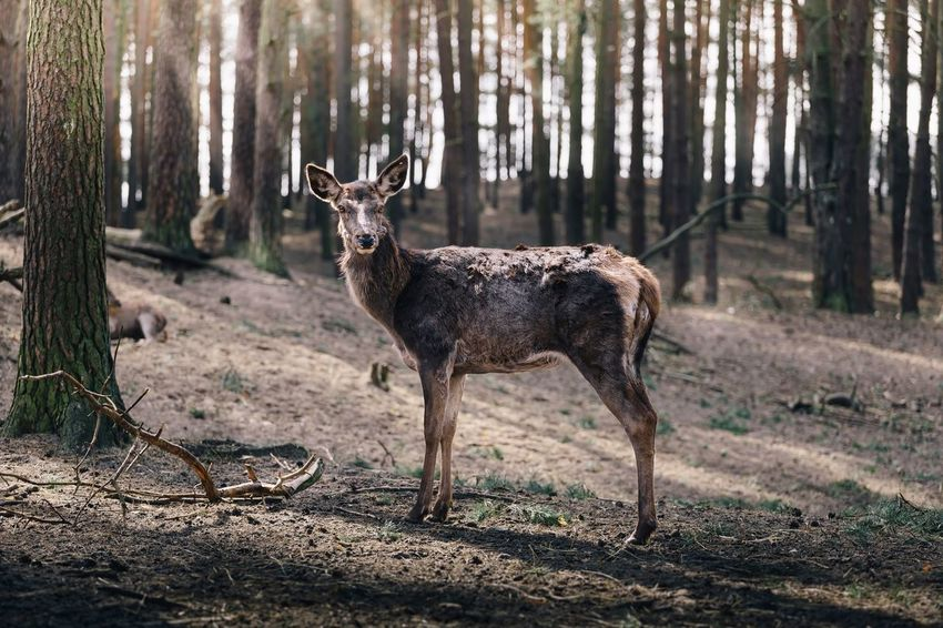 Animal Animal Themes Animals In The Wild Deer One Animal Outdoors Side View Standing Wildlife