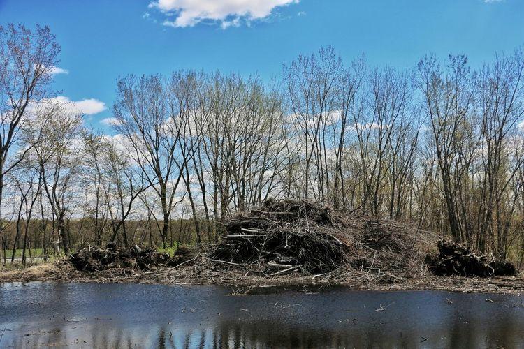 Discover  Swamp Dark Lake Black Lake Pond Of Darkness Countryside Indiana Cold Spring Lake Trees