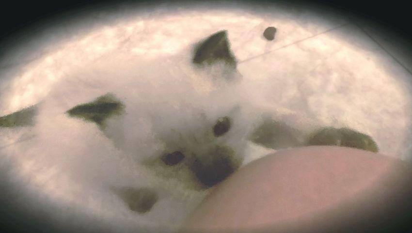 Kitten Baby Animals Curious Kitten Innocent Face