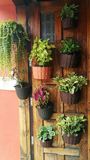 Beautifully Organized Plant Flower Growth No People Outdoors Day Flower Pots SanCriatobal Mexico Phtography 2016 Travel