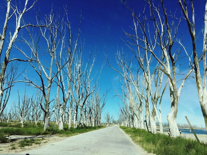 Dead road trees in Villa Epecuén Solitude Dead Blue Sunlight Tranquility Tree Outdoors Day Nature The Way Forward Clear Sky Road Sky Tranquil Scene No People Scenics Beauty In Nature Ruins Abandoned Abandoned Places First Eyeem Photo EyeEmNewHere