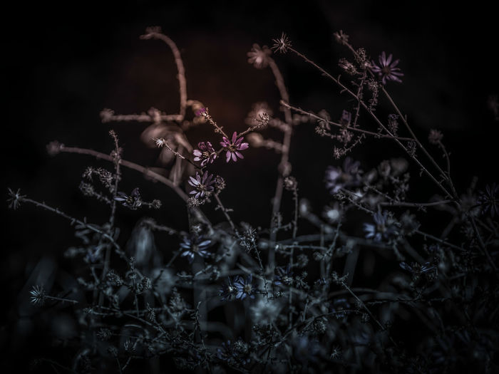 Close-up of wilted plant on field at night