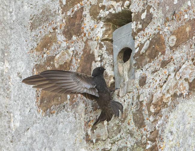 Bird flying over wall