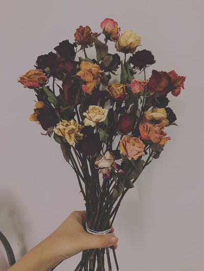Flowers Hand Holding Human Body Part One Person Indoors  Flowering Plant