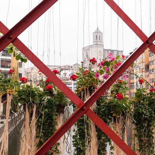Girona temos de flors... La foto !! Crec que tot-hom la fa 😂😂😂 Gironamenamora Girona Temps De Flors 2016 Hablamesinpalabras For You Dear Girona Temps De Flors 2016