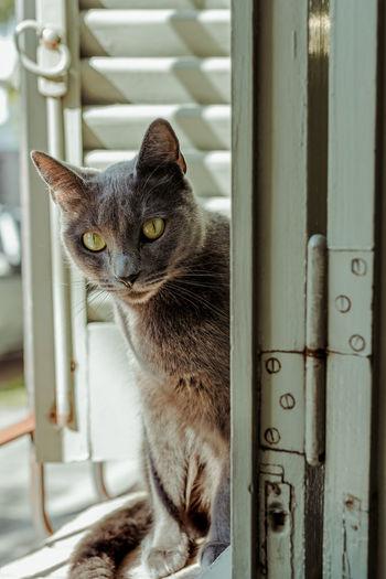 Portrait of cat sitting on metal