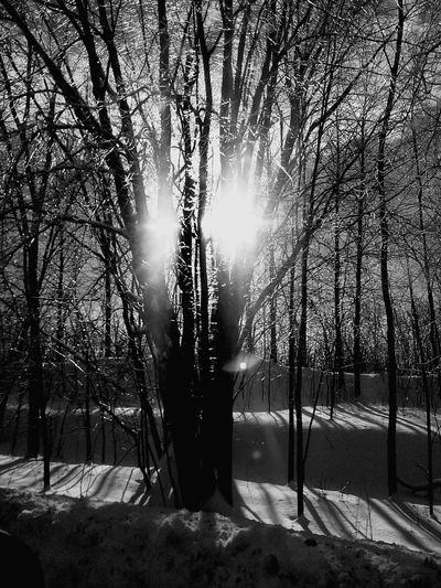 I have a thing for trees, and nature, obviously black and white. This pic also taken locally, and during our winter months. Nature Photography Mother Natures Gift