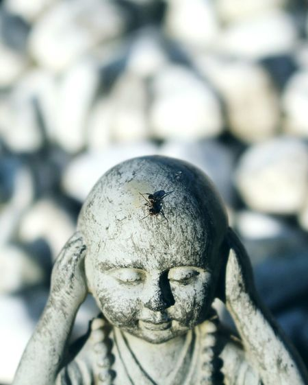 Close-Up Of Ant On Old Statue