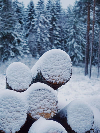 snowcapped timber Timber Timber Railing Forest Wood WoodLand Snow Snowcapped Snow Covered Winter Winter Snow Cold Temperature Ice Frozen Weather Frost Nature Polar Climate Frozen Water Snowing White Color Landscape Cold Beauty In Nature Snowflake Blizzard Scenics No People Tranquility Shades Of Winter