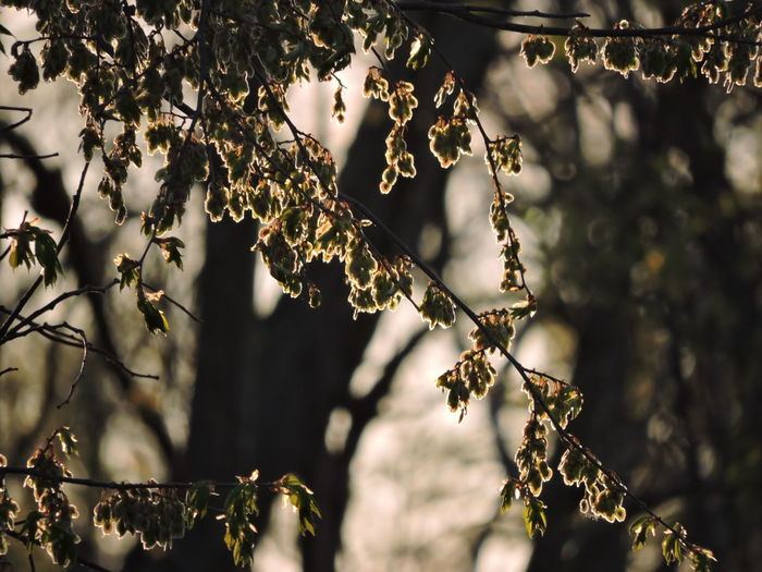 Backlighting Photography New Growth Springtime Plant Tree Focus On Foreground Growth Beauty In Nature Nature Day No People Branch Close-up Outdoors Tranquility Selective Focus Flower Vulnerability  Fragility Flowering Plant Plant Part Sunlight Leaf
