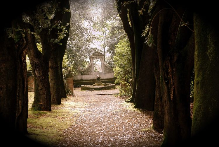 Pari mistero Shadow And Light Aedicula Plant Tree Architecture No People Built Structure Nature The Way Forward Park Formal Garden Park - Man Made Space Footpath Tranquility Sunlight Direction Religion