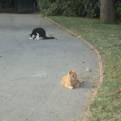 Cats Kissaa Gatos Gatoscallejeros Streetcats Katukissat Barcelona Parquecervantes Parque  Park Puisto Bcnexploradores Bcnexplorers Thebarcelonist