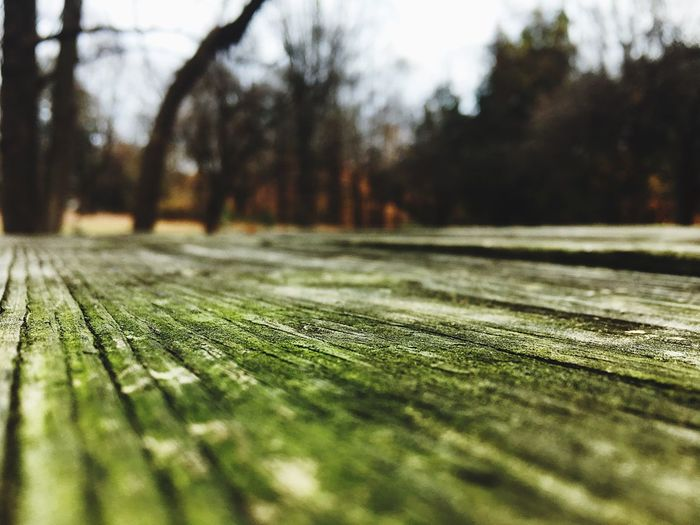 A worms eye view Nature National Park Pennsylvania Garden Wood Woodenbench Scenery Wormseyeview Tree No People Close-up Tranquility Growth Outdoors Day Surface Level Green Color Grass Beauty In Nature