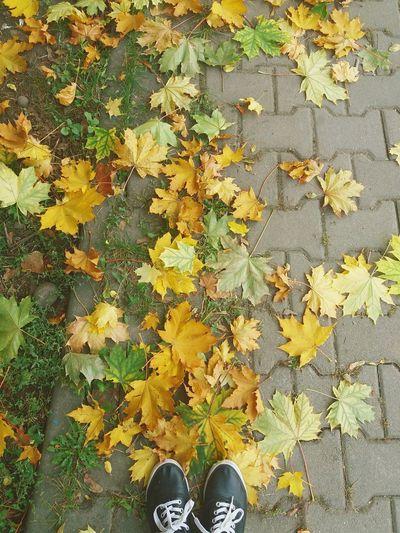 Shoe Day Leaf