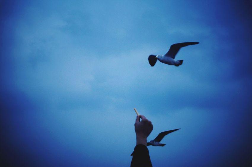 On way udo in jeju Udo JEJU ISLAND  Seagull