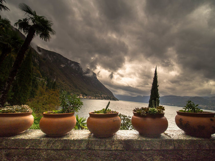 Cloud - Sky Sky Plant Potted Plant Nature Growth No People Beauty In Nature Tree Day Cactus Outdoors Overcast Succulent Plant Mountain Water Side By Side Scenics - Nature Land Flower Pot Como Como Lake Lake Dramatic Sky Lake View