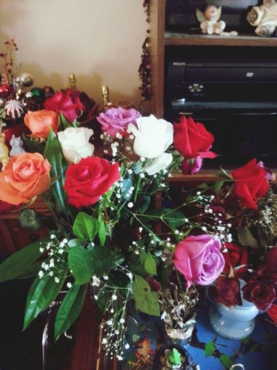 Roses By Any Other Name. ..♡♡
