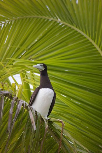 Boobie blue-Footed boobie Green Color Bird One Animal Nature Animals In The Wild Animal Wildlife Animal Themes Outdoors Beauty In Nature No People Tree Day Boobie Blue Footed Boobie Fiji Fiji Islands Fidschi