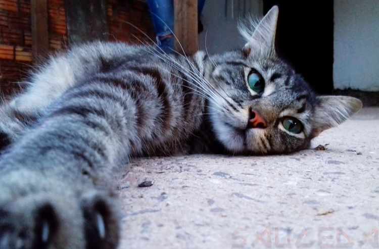 EyeEm Selects Pets Feline Domestic Cat Whisker Lying Down Cat Looking At Camera Close-up