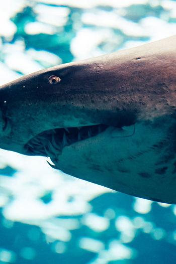 #aquarium Macro Photography #Aquarium #aquarium #fish #ocean #beautiful #amazing #blue #aquarium #fish #ocean #beautiful #amazing #blue #aquarium Macro Photography #aquariumfish #bigfish #Blue #coral #coralreef #coralreefs #exotic Fish #fish #aquarium #fishtank #TagsForLikes #fishporn #instafish #instagood #swim #swimming #water #coral #ree #bigfish #Blue #coralreefs #exotic Fish #fishtank #greyshark #Moray #Moray Eel #Moray Eel #Nature  #ocean #oceanfish #reef #shark #StockPhotography #wildlife
