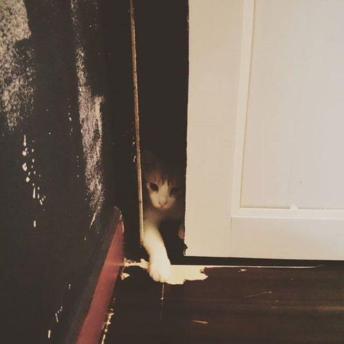 鎮... Cat Canton Meaninglessart