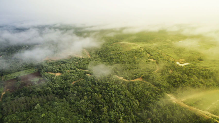 Aerial photography of country side with amazing sunrise scenery.View from above the cloud and thick mist.Sunrise at village. Australian Landscape Cloud Thailand Aerial Photography Amazing Background Beauty In Nature Countryside Fresh Mist Misty Morning Nature Outdoors Scenery Tree Wallpaper