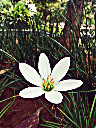 Kct By Samsung Galaxy Note2 Flowers 😍😂😄 First Eyeem Photo
